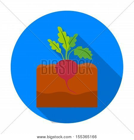 Beet icon in flat style isolated on white background. Plant symbol vector illustration.
