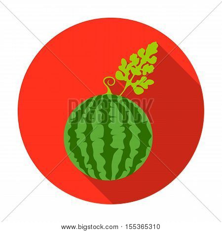 Watermelon icon in flat style isolated on white background. Plant symbol vector illustration.