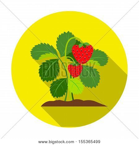 Strawberry icon in flat style isolated on white background. Plant symbol vector illustration.