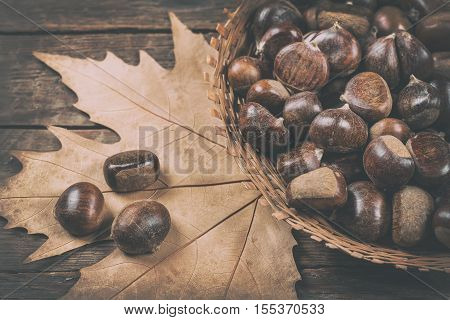 Chestnut on brown wooden background. Autumn background