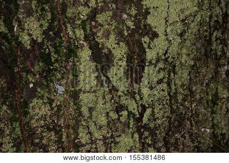 old wood tree bark texture with green moss tree bark bark photo bark background bark macro forest tree tree texture bark texture
