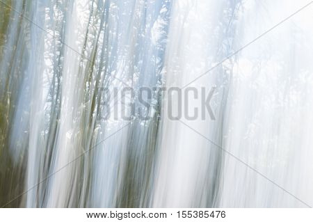 Blurred Abstract Background. Dragged Paint Effect Forest.