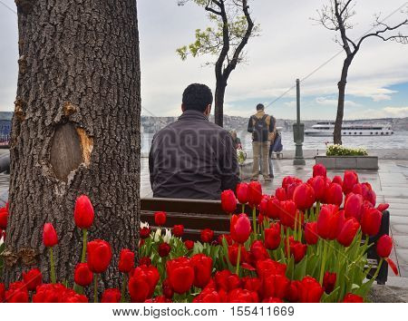 Istanbul Turkey - April 18 2014: Besiktas Pier Square. Tulip season more beautiful after the rain Besiktas Pier the pier and the busiest square in the throat millions trip passes from one continent to other continents of the passenger.