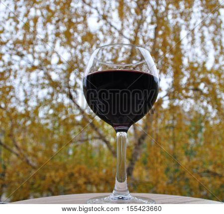 glass, glass, wine, fall, glass of red wine, glass on the stem, vine, tree, leaves, yellow, clear, red
