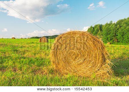 fardos de feno num campo