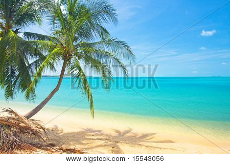 tropical beach with coconut palm and sea