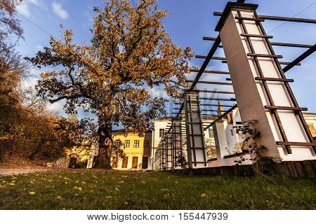 Mighty tree with yellow leaves in autumn. Castle of Lysice.
