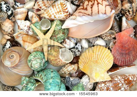 Colorful seashells background and star