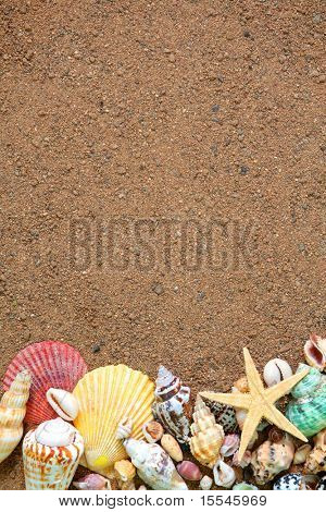 summer concept. seashells frame on sand background