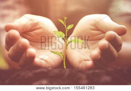 Growing a plant. Hands holding and nurturing tree growing on fertile soil / nurturing baby plant / protect nature / Agriculture