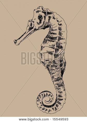 Hand drawn sea horse vector. Visit my portfolio for big collection of doodles