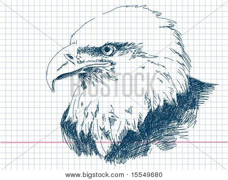 Hand drawn eagle Vector. Visit my portfolio for big collection of doodles