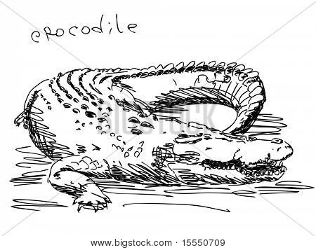 Hand drawn crocodile Vector