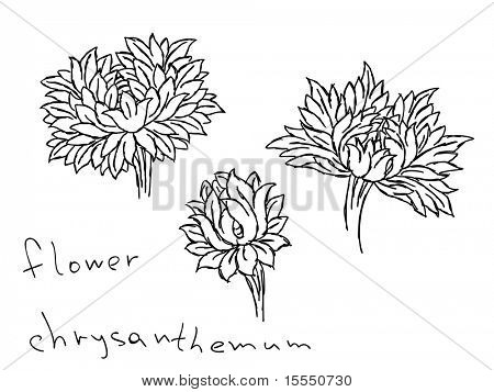 Hand drawn chrysanthemum flowers Vector