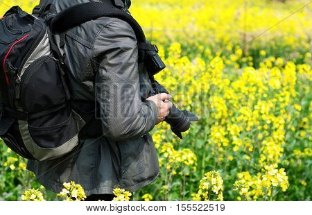 Yellow rape in the spring village attracts photographers.