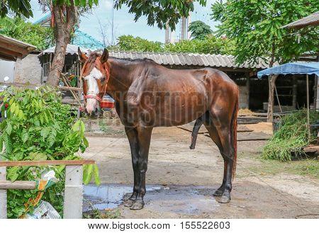 big horse dick