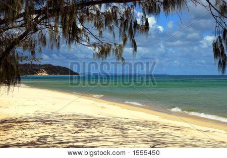 Subtropical Sandy Beach
