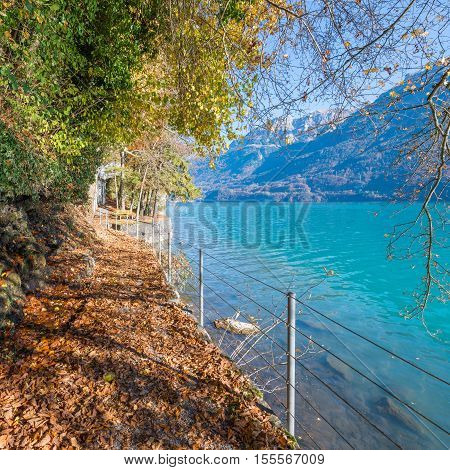 Path along mountain lake. The fallen orange and yellow foliage. Autumn clear and quiet day. Switzerland near city Bern.