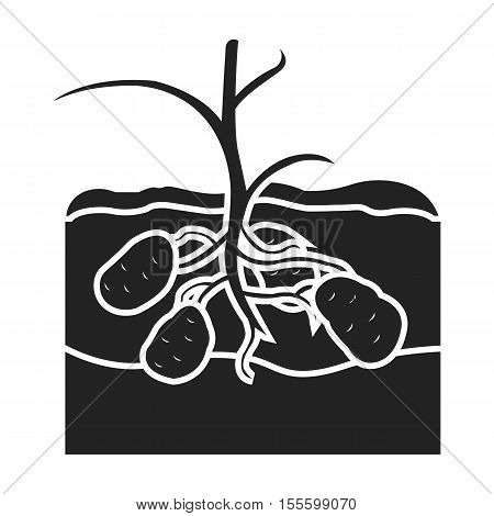 Potato icon in black style isolated on white background. Plant symbol vector illustration.