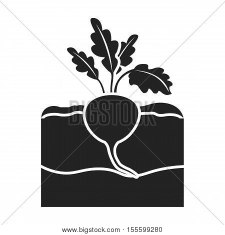 Beet icon in black style isolated on white background. Plant symbol vector illustration.