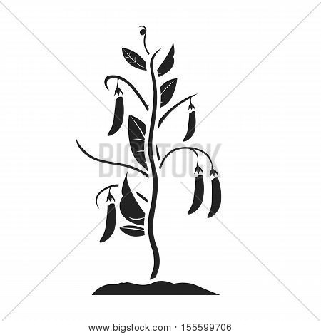 Peas icon in black style isolated on white background. Plant symbol vector illustration.