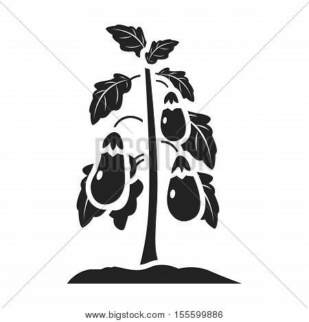 Eggplant icon in black style isolated on white background. Plant symbol vector illustration.