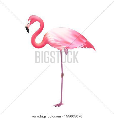 Pink elegant flamingo bird standing on one leg against white background realistic isolated image icon illustration vector