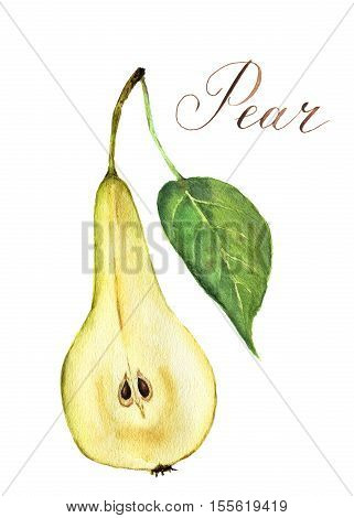 Watercolor pear cutaway. Botanical illustration isolated on white background.