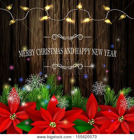 Christmas decoration and greeting card with evergreen trees with poinsettia christmas lights isolated on wooden wall