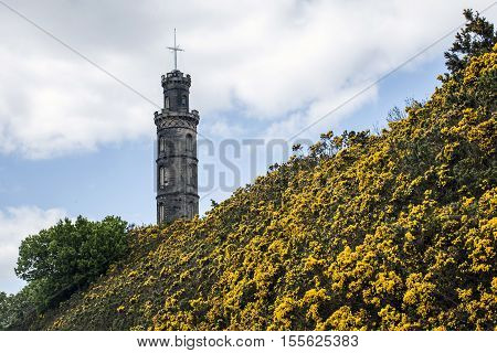 Edinburgh city the historic Calton Hill Monuments yellow flowers
