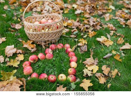 season, nature, love, valentines day and environment concept - apples in wicker basket and heart shape with autumn leaves on grass