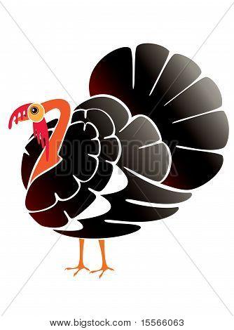 Beautiful male turkey