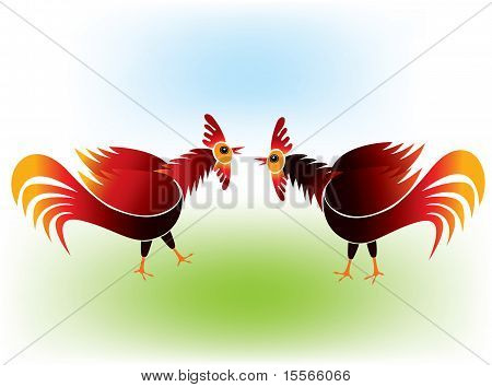 Cock fighting