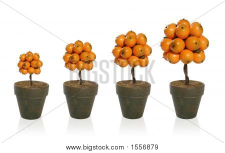 Tree Of Orange Fruit
