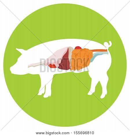 pig anatomy. digestive system of the pig. incide view