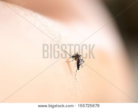 Mosquito bite on human skin (selective focus)