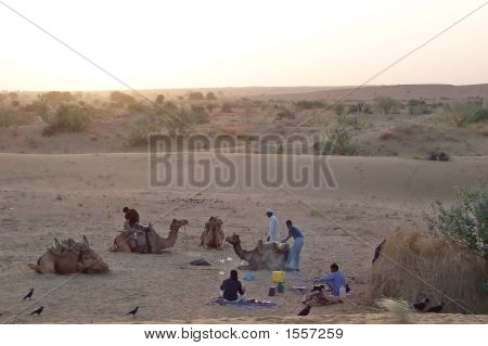 Resting Camp After A Camel Treck, Jaisalmer Desert, India