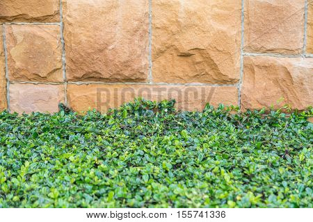 Grass plants leafs and gravel concrete background. Decorative exterior concept for floor or wall pattern of gravel sandstone concrete texture with green grass and plant leafs abstract background