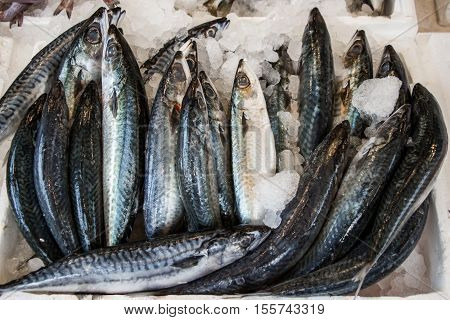 Freshly caught mackerel fishes on ice in the box on the counter at the fish shop for sale. Mackerel fishes on ice at the fish market. Horizontal. Top view.