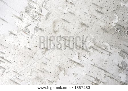 White Birch Tree Bark Texture Horizontal