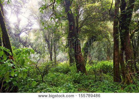 Deep jungle under rain in the Doi Inthanon mountains, Thailand