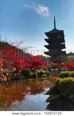 To-ji Pagoda Japan during the fall season kyoto