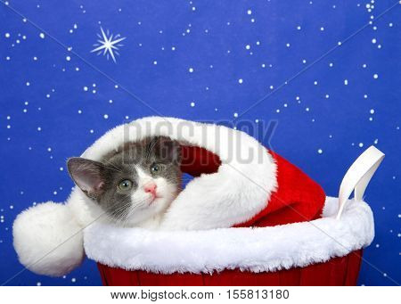 Tabby kitten gray and white peaking out of red velvet and white fur lined fabric in a fur lined basket blue starry background one star large and bright copy space