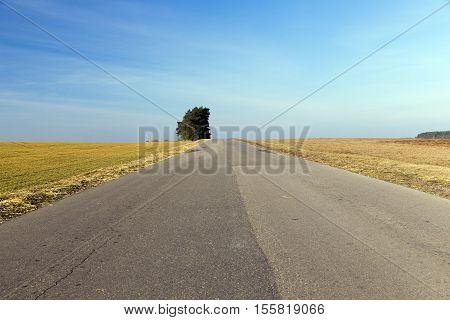 rural road covered with asphalt layers different in the summer. Blue sky in the background and a growing tree with green leaves.