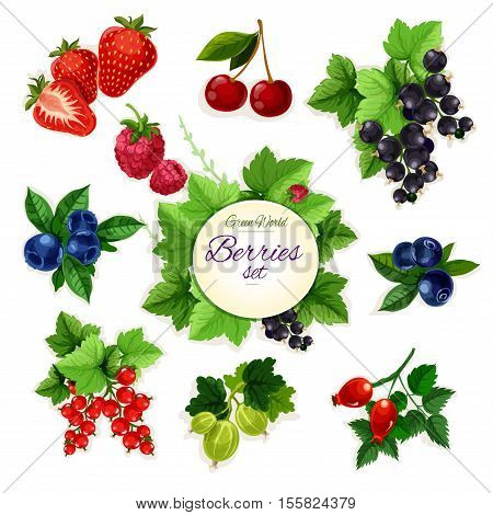Berries. Isolated vector berry icons of cherry, strawberry, raspberry, black currant, red currant, blueberry, blackberry, gooseberry, dog-rose berry fruit. Farm and garden fresh berry bunch and cluster symbols