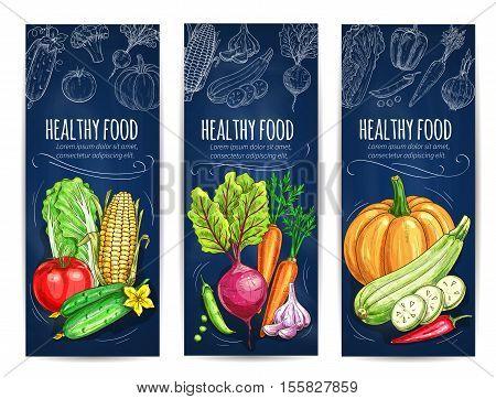 Vegetables. Vegetarian banners with chalk sketch cabbage, tomato, cucumber, corn, beet, pumpkin and pea, garlic and pepper on blackboard. Vegan menu card design