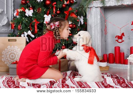 Sweet girl 6 years old with gray-green eyes,brunette hair braided in two pigtails,a red and white striped bows ,dressed in a red knit dress,spends the Christmas holidays with his friend,a puppy Golden Retriever, at home near Christmas tree
