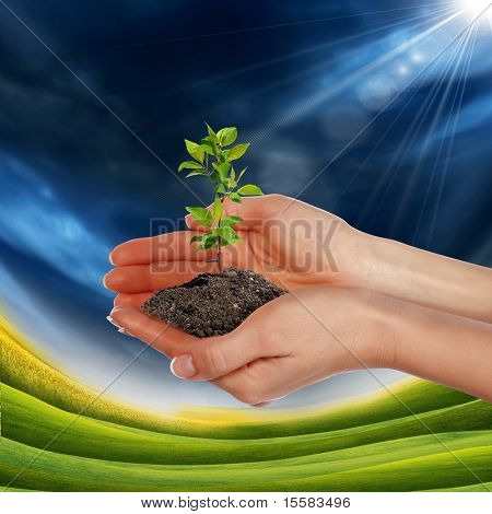 picture of hands holding small growing green plant