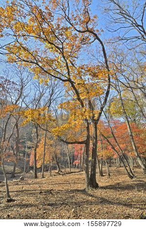 The autumn landscape in forest. Russian Far-East.