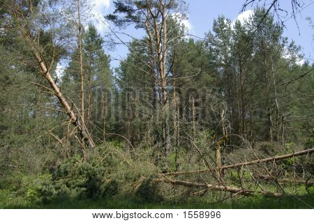 Wood After Hurricane